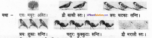 UP Board Solutions for Class 6 Sanskrit Chapter 13 काकः 1