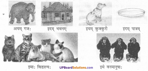 UP Board Solutions for Class 7 Sanskrit chapter 2 चित्रपाठ 1