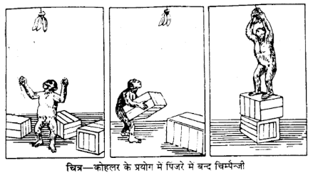 UP Board Solutions for Class 12 Psychology Chapter 3 Learning 2