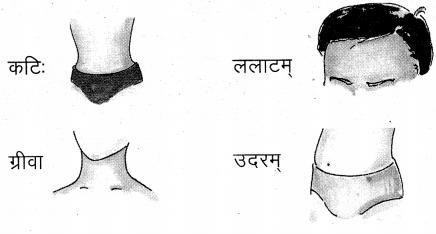 UP Board Solutions for Class 4 Sanskrit Piyusham Chapter 10 शरीरस्य अंगानि 2