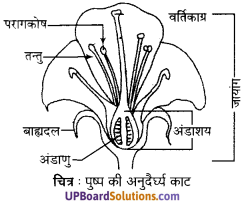 UP Board Solutions for Class 10 Science Chapter 8 How do Organisms Reproduce img-3
