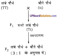 UP Board Solutions for Class 10 Science Chapter 9 Heredity and Evolution img-1