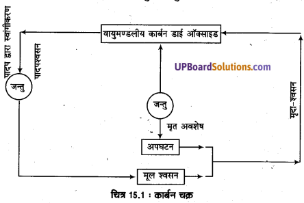 UP Board Solutions for Class 11 Geography Fundamentals of Physical Geography Chapter 15 Life on the Earth(पृथ्वी पर जीवन) img 3