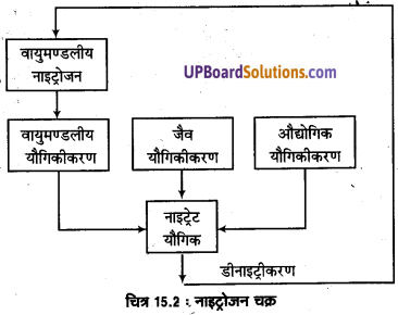 UP Board Solutions for Class 11 Geography Fundamentals of Physical Geography Chapter 15 Life on the Earth(पृथ्वी पर जीवन) img 4