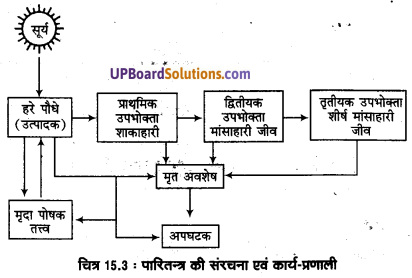 UP Board Solutions for Class 11 Geography Fundamentals of Physical Geography Chapter 15 Life on the Earth(पृथ्वी पर जीवन) img 6
