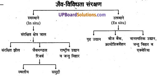UP Board Solutions for Class 11 Geography Fundamentals of Physical Geography Chapter 16 Biodiversity and Conversation (जैव विविधता एवं संरक्षण) img 1