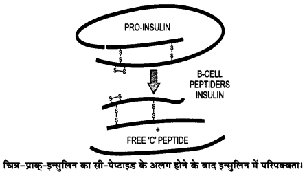 UP Board Solutions for Class 12 BiologyChapter 12 Biotechnology and its Applications img-1