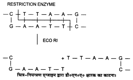 UP Board Solutions for Class 12 BiologyChapter 12 Biotechnology and its Applications img-4