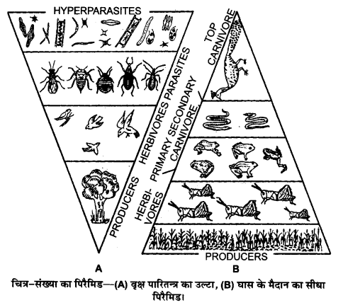 UP Board Solutions for Class 12 BiologyChapter 14 Ecosystem img-10