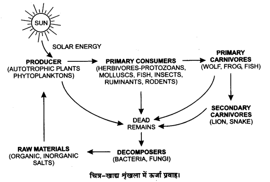 UP Board Solutions for Class 12 BiologyChapter 14 Ecosystem img-11