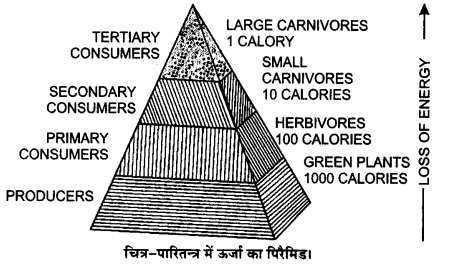 UP Board Solutions for Class 12 BiologyChapter 14 Ecosystem img-12