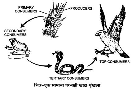 UP Board Solutions for Class 12 BiologyChapter 14 Ecosystem img-14