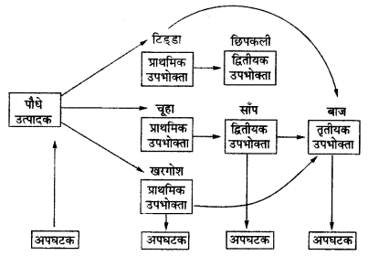 UP Board Solutions for Class 12 BiologyChapter 14 Ecosystem img-15