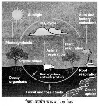 UP Board Solutions for Class 12 BiologyChapter 14 Ecosystem img-16