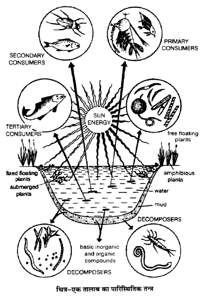 UP Board Solutions for Class 12 BiologyChapter 14 Ecosystem img-17