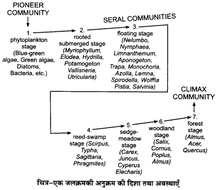 UP Board Solutions for Class 12 BiologyChapter 14 Ecosystem img-18