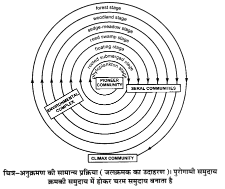 UP Board Solutions for Class 12 BiologyChapter 14 Ecosystem img-19
