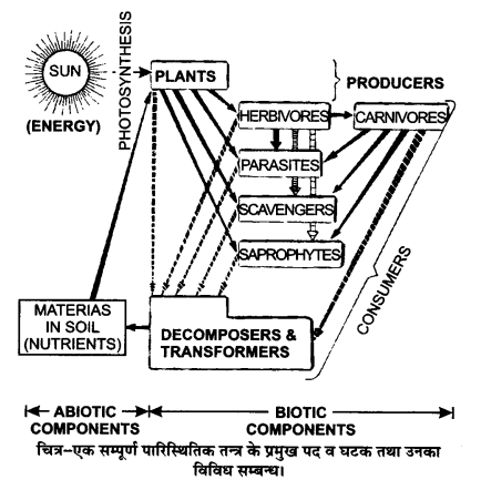 UP Board Solutions for Class 12 BiologyChapter 14 Ecosystem img-8