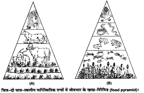 UP Board Solutions for Class 12 BiologyChapter 14 Ecosystem img-9
