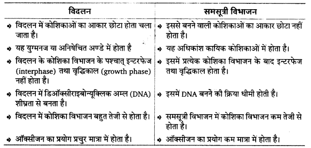 UP Board Solutions for Class 12 BiologyChapter 3 Human Reproduction img-9