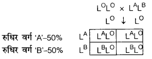 UP Board Solutions for Class 12 BiologyChapter 5 Principles of Inheritance and Variation img-16