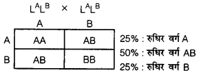 UP Board Solutions for Class 12 BiologyChapter 5 Principles of Inheritance and Variation img-28