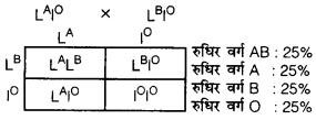 UP Board Solutions for Class 12 BiologyChapter 5 Principles of Inheritance and Variation img-29