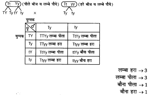 UP Board Solutions for Class 12 BiologyChapter 5 Principles of Inheritance and Variation img-8