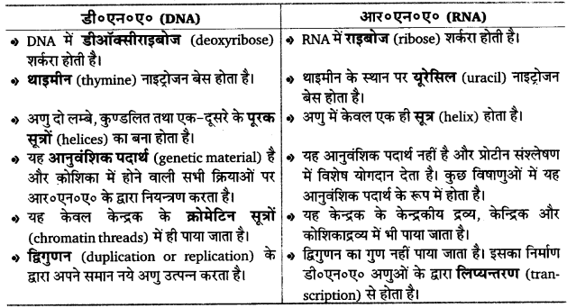 UP Board Solutions for Class 12 Biology Chapter 6 Molecular Basis of Inheritance img-9