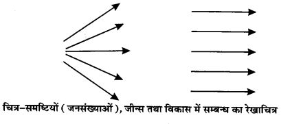 UP Board Solutions for Class 12 BiologyChapter 7 Evolution img-11