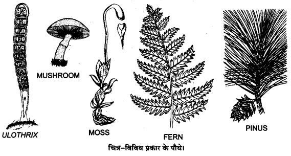UP Board Solutions for Class 12 BiologyChapter 7 Evolution img-3