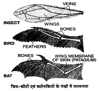 UP Board Solutions for Class 12 BiologyChapter 7 Evolution img-9
