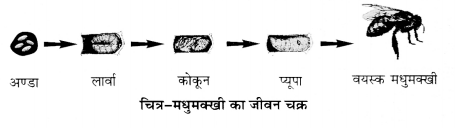 UP Board Solutions for Class 12 Biology Chapter 9 Strategies for Enhancement in Food Production img-7