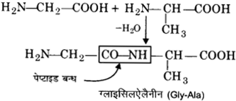 UP Board Solutions for Class 12 Chemistry Chapter 14 Biomolecules image 10