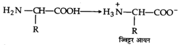 UP Board Solutions for Class 12 Chemistry Chapter 14 Biomolecules image 11