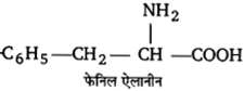 UP Board Solutions for Class 12 Chemistry Chapter 14 Biomolecules image 31
