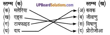 UP Board Solutions for Class 8 Science Chapter 5सूक्ष्मजीवों का सामान्य परिचय एवं वर्गीकरण img-2