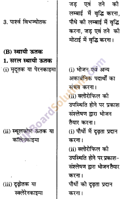 UP Board Solutions for Class 9 Science Chapter 6 Tissues image -10