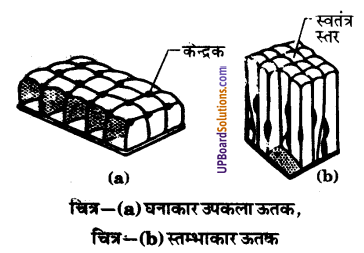 UP Board Solutions for Class 9 Science Chapter 6 Tissues image -15