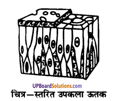 UP Board Solutions for Class 9 Science Chapter 6 Tissues image -16