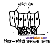 UP Board Solutions for Class 9 Science Chapter 6 Tissues image -20