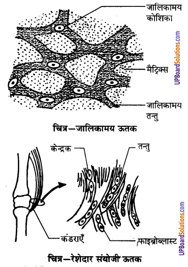 UP Board Solutions for Class 9 Science Chapter 6 Tissues image -22