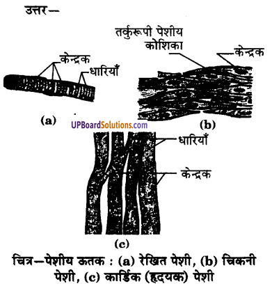 UP Board Solutions for Class 9 Science Chapter 6 Tissues image -3