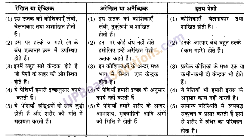 UP Board Solutions for Class 9 Science Chapter 6 Tissues image -4