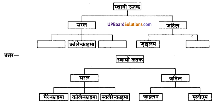 UP Board Solutions for Class 9 Science Chapter 6 Tissues image -6