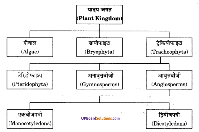 UP Board Solutions for Class 9 Science Chapter 7 Diversity in Living Organisms image - 8